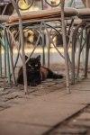 Black cat - laura dragulin - photostories