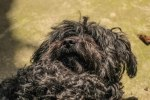 My Dog - laura dragulin -photostories