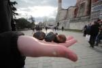 Roasted Chestnuts Topkapi Palace